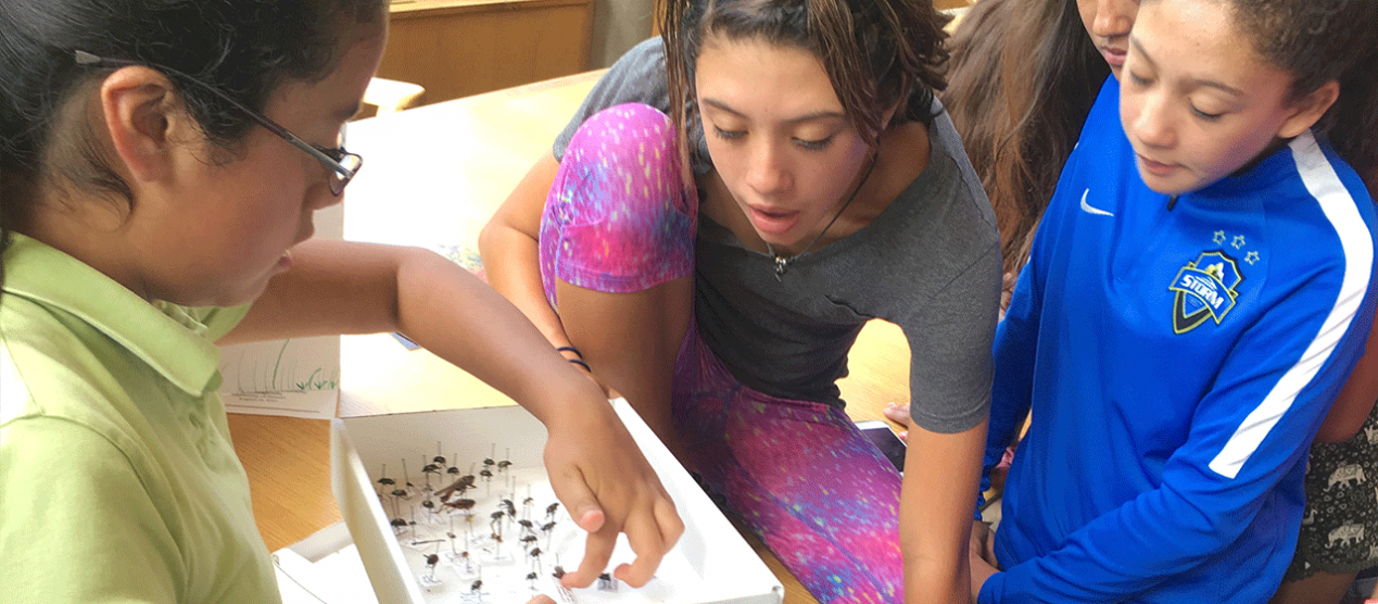 campers learning about biodiversity